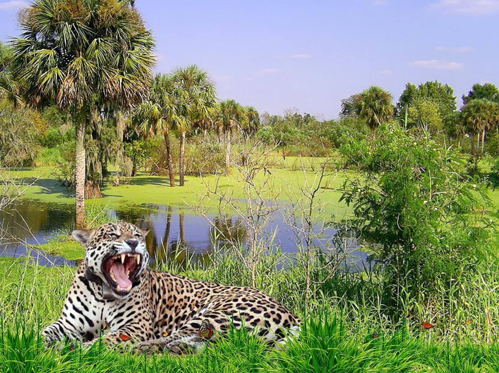 Amazonica Radio - Fondo Jaguar